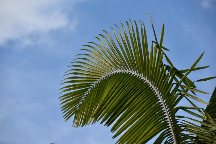 Leaf Growth Palm Leaf Plant Palm Tree Sky Nature Green Color Beauty In Nature Low Angle View No People Day Spiky Outdoors Tranquility Eye4photography  EyeEm Nature Lover EyeEm Gallery Purist In Photography The Purist (no Edit, No Filter) Nikon