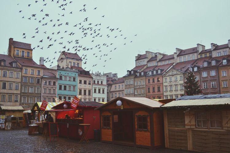 Flock of birds flying over houses