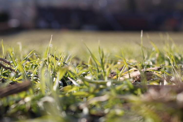 Grass Selective