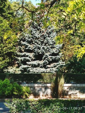 Волгоград. Grass Shadow Tree Nature Day First Eyeem Photo