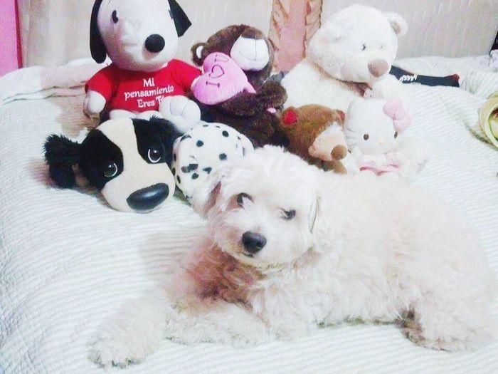 My Dog and Teddybear