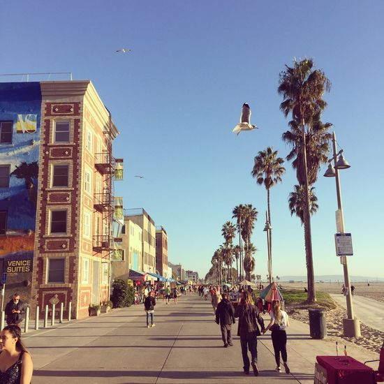 Venice Beach Sunset La La Land Sun Walk Beach California Venice Beach Real People Architecture Clear Sky Built Structure Building Exterior Large Group Of People Day Walking Outdoors Women Men Sky Bird Tree City Adult People Adults Only Business Stories California Dreamin