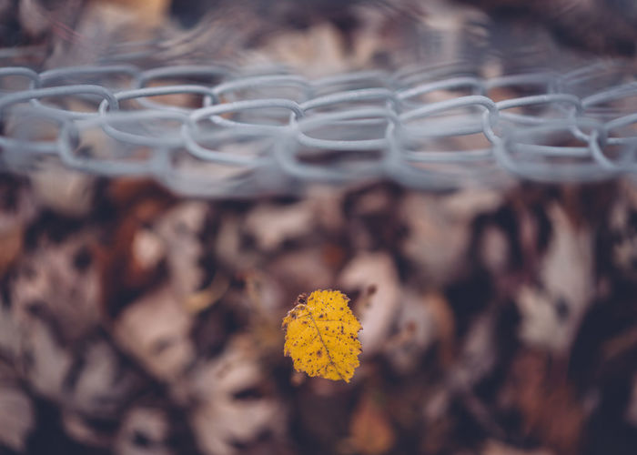 Close-up of autumn leaf by tennis net