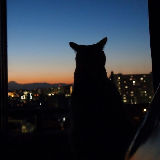 She has a curiosity about the outer world. Cat Twilight Mt.Fuji