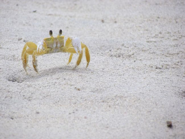 Oh crab! Crab Itamambuca Brasil Brazil Paint The Town Yellow