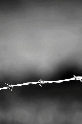 barbed wire in