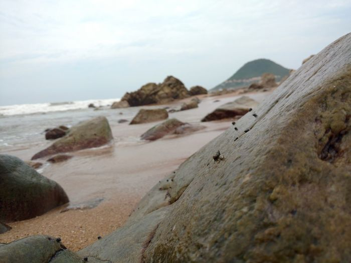 Snails On Rocks Snails Beach Beach Photography Rocks And Water Rocks On The Shore Rocks And Hills Sea Rocks