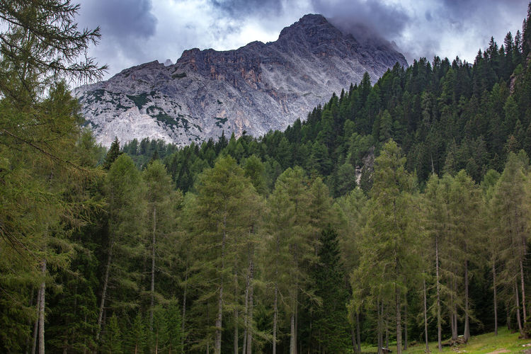 Hiking in Italy Tree Plant Land Green Color Nature Forest No People Outdoors Hiking Italy Dolomites, Italy Dolomites Dolomiti Dolomiti Italy Dolomiten Travel Destinations Travel Traveling Travel Photography Sesto  Wood