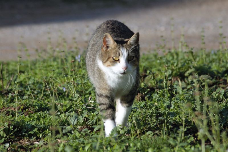 Cat Domestic Cat Domestic Animals Pets Animal Themes One Animal Mammal Grass Feline Whisker No People Field Cat Outdoors Plant Nature Portrait Day Angry EyeEm Nature Lover Nature_collection Nature in Orbetello Wwfoasi
