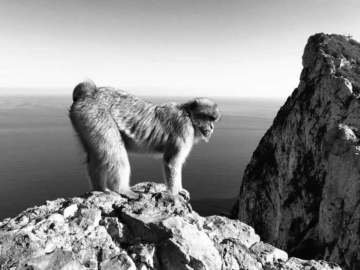 Monkey on rock formation against sky