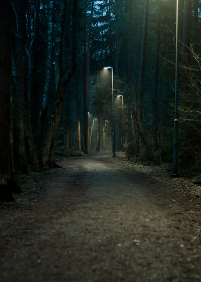 Road amidst trees in forest at night