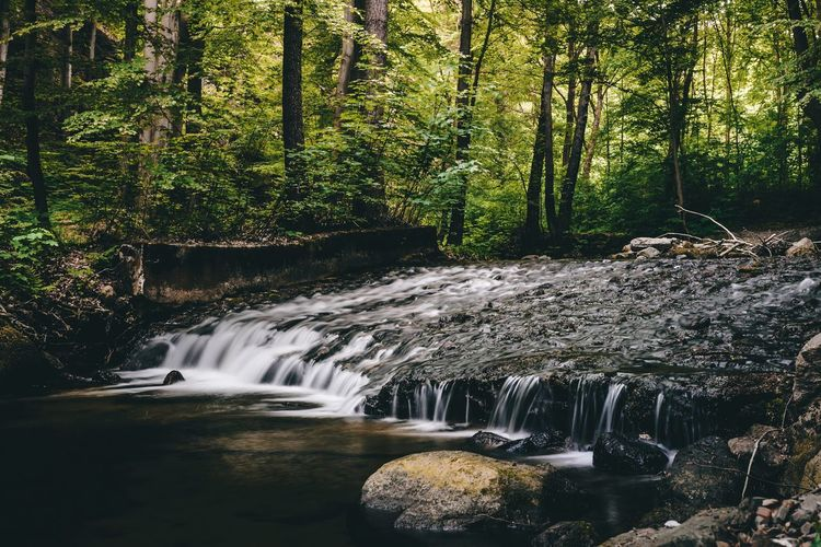 Scenic View Of Stream Flowing In Forest