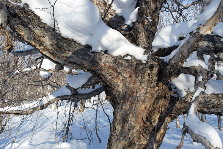 The tree Beauty In Nature Branch Cold Temperature Day Nature No People Outdoors Perching Snow Tree Winter