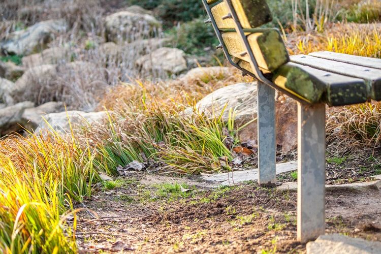Park Bench Bench Ground Level View Gravel Dirt Tall Grass Wooden Bench Iron Post Wood Grain Chair Outdoors Close-up Serenity Peaceful Thinking Place Adapted To The City Weathered Wood Weathered Park