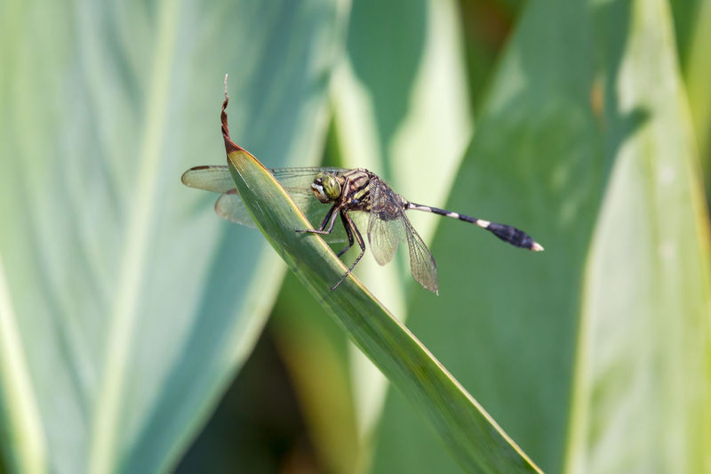 dragonfly Animal Animal Themes Animal Wildlife Animal Wing Animals In The Wild Blade Of Grass Close-up Damselfly Day Dragonfly Focus On Foreground Green Color Growth Insect Invertebrate Leaf Nature No People One Animal Plant Plant Part Selective Focus