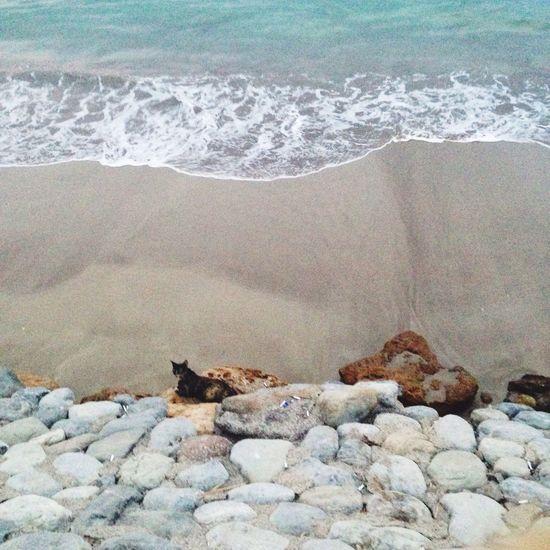 Cat by the beach. Cat Model Beach Waves Shore First Eyeem Photo