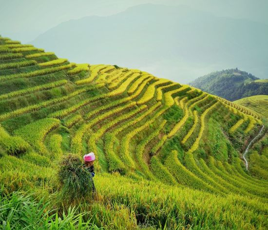 The Week On EyeEm EyeEmNewHere Village View Terraced Rice Fields Mountain Range Been There. Village Agriculture Nature Social Issues Environmental Conservation Landscape Agriculture Field Reap Travel Beauty Woman Land Portrait Photography Beauty In Nature Scenics Terraced Field Mountain