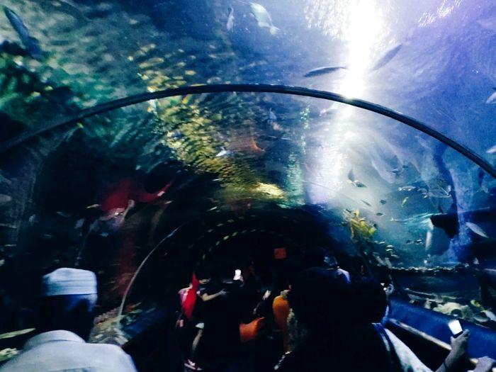 Aquaria Klcc Fish Aquarium