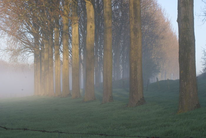Good Morning Early Morning Nature Nature Photography Nature On Your Doorstep Fog Foggy Morning Misty Misty Morning Trees Row Row Of Trees Early Sunday Morning Sun Through Fog Barbed Wire Grass Zeeland