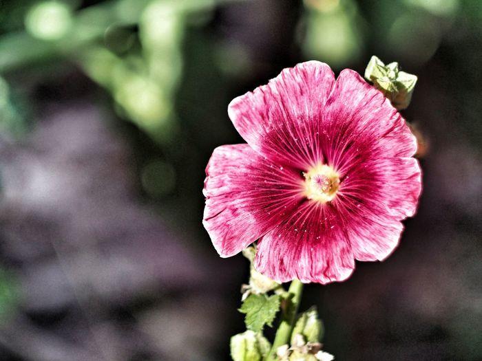 pink flower,