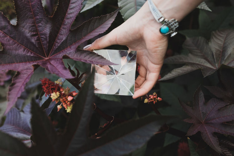Cropped hands of woman holding prism against flowering plant