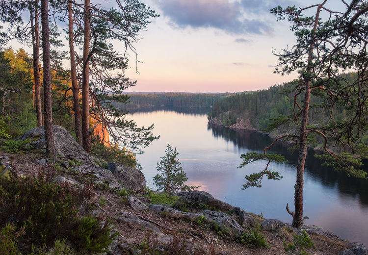 Scenic landscape with woodland and lake view at summer evening in Finland Tree Water Tranquil Scene Tranquility Beauty In Nature Plant Scenics - Nature Sky Lake No People Non-urban Scene Nature Land Forest Idyllic Sunset Cloud - Sky Environment Outdoors Finland Tranquility Landscape River High Angle View Atmospheric Mood Peaceful Moment Of Silence WoodLand Blue Summer Evening Light Green Color Tree Trunk Pine Tree
