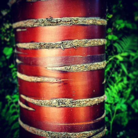 """Stripey Tree"" Tree Treesofinstagram Bark Flora Fauna Ferns Parklife Nature WoodLand Woods Treeshunter Treescollection Brown Green Stripes"