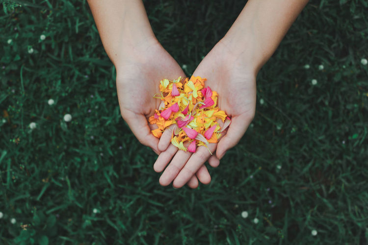 Midsection of person holding flower in field