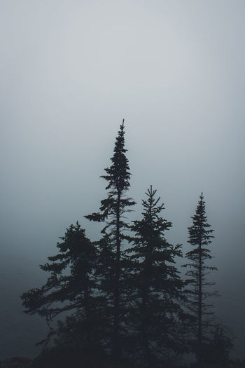 Beauty In Nature Day Fog Forest Great Lakes Growth Growth Landscape Minnesota Nature No People Outdoors Pine Tree Scenics Sky Tranquil Scene Tranquility Tree