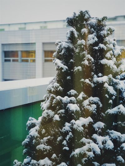 It snowed. Snow Winter Cold Temperature Nature Weather Frozen Outdoors Snowing Close-up Tree No People