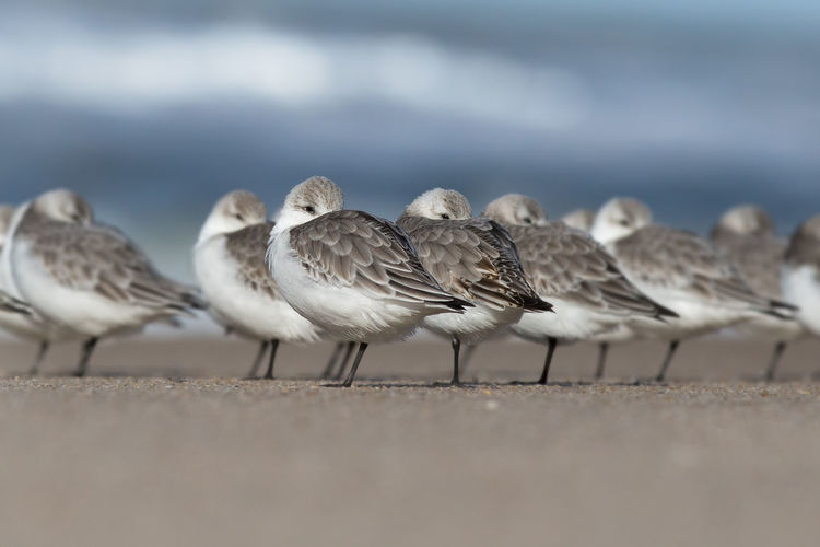 Sea birds standing on the beach