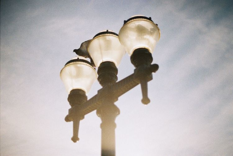 Analogue picture taken in Porto, Portugal by the beach. City Light Nature Porto Portugal Sunlight Bird Day Illuminated Lighting Equipment Low Angle View No People Outdoors Sky