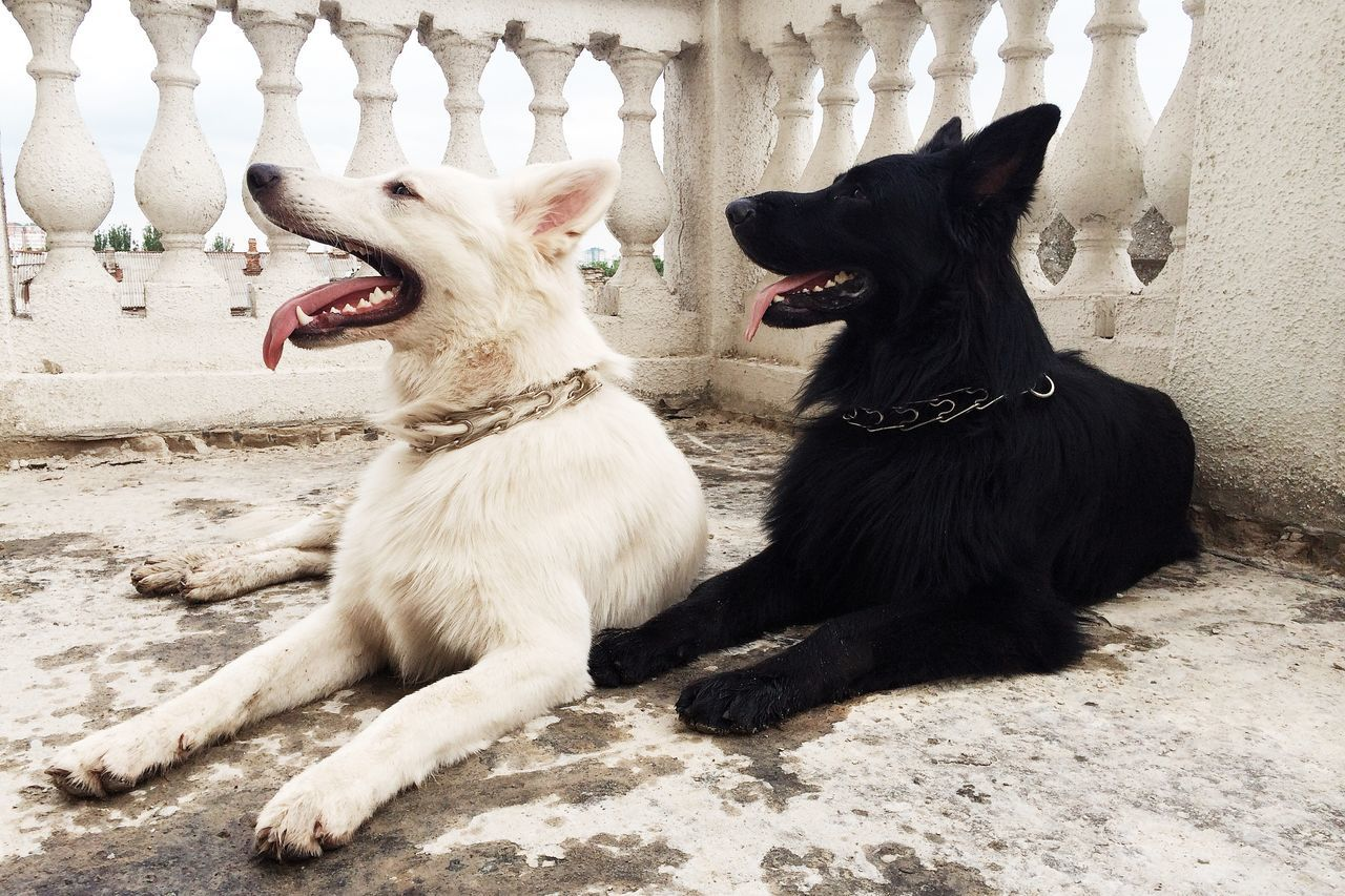 Dogs relaxing on building terrace