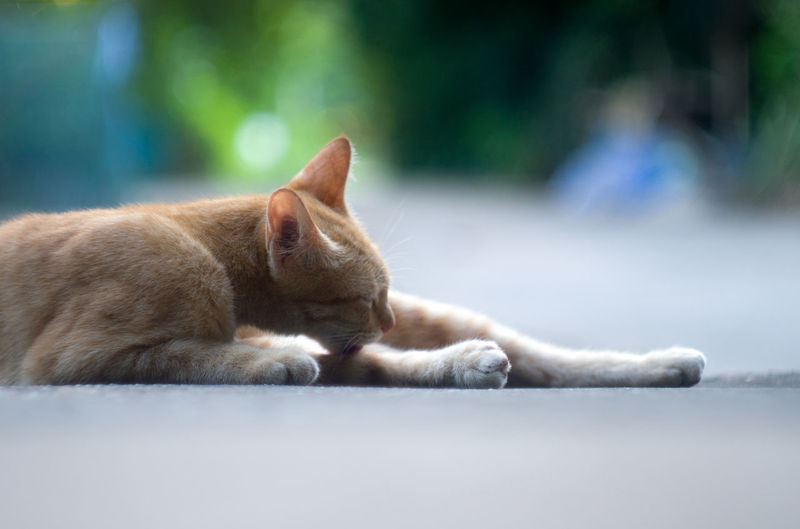 Side view of a relaxed cat