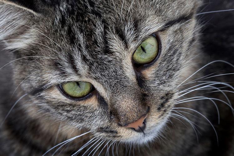 Cat head close