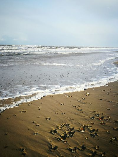 Bunte Steine. Beach Sea Water Wave Sand Nature Horizon Over Water Outdoors No People Beauty In Nature Stones & Water