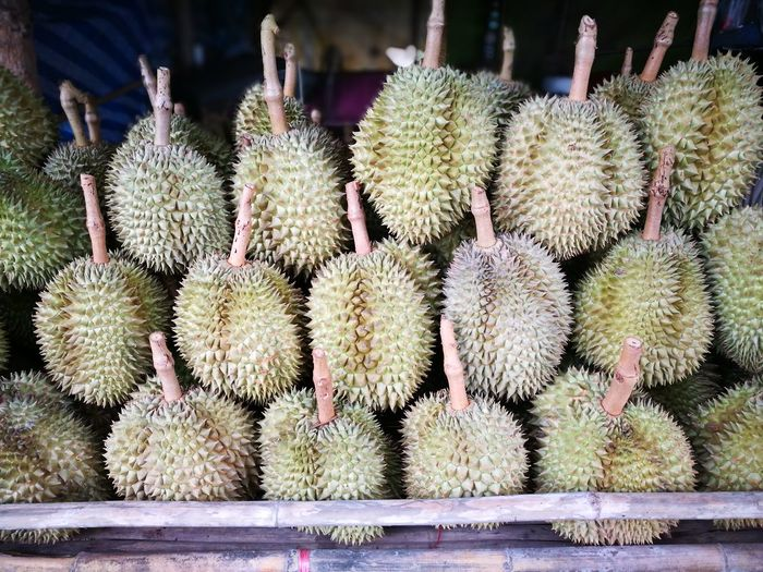 Durian Durian Fruit Thorn Spiked Growth Plant Nature Outdoors Day No People Close-up Freshness Food Beauty In Nature Prickly Pear Cactus