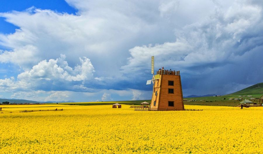 The Nice time in Qinghai proviTaking Photos Flowers EyeEm Best Shots RapeFlowers The Great Outdoors - 2016 EyeEm Awards Hello World Flower Sea The Week On Eyem Yellow Flower