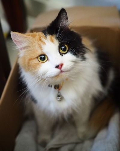 Domestic Cat Pets Feline Domestic Animals Animal Themes One Animal Animal Portrait Looking At Camera No People Mammal Whisker Yellow Eyes Kitten Alertness Indoors  Sitting Day Close-up