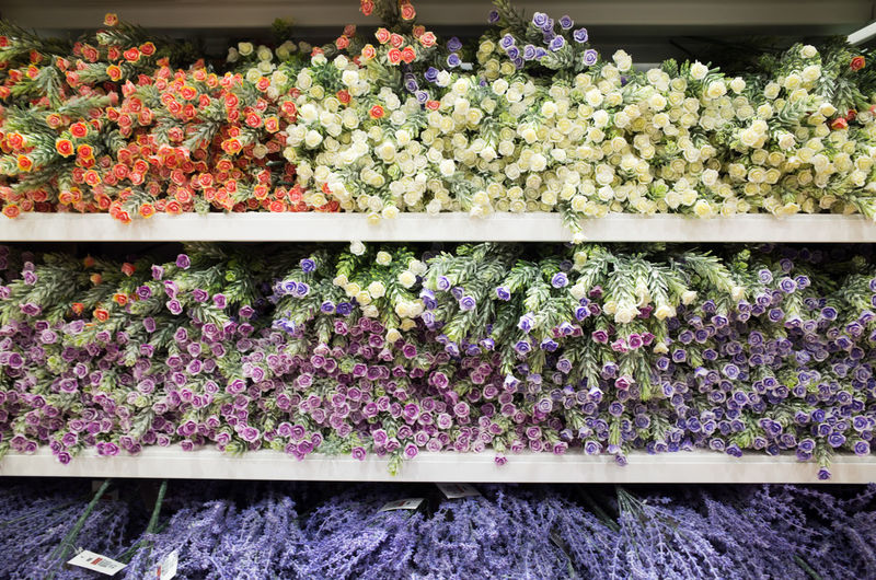 Plant Variation Beauty In Nature Choice Abundance Flower Flowering Plant Nature For Sale Freshness Arrangement Retail  Vulnerability  Fragility No People Growth Store Flower Head Day Large Group Of Objects Flower Market Shelf Outdoors Retail Display Sale