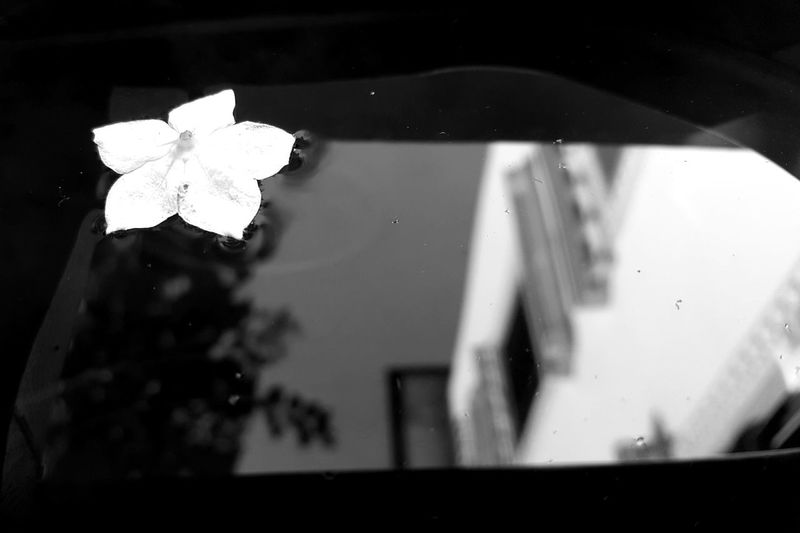 Reflection Low Angle View Geometric Shape Growth Springtime Nature No People Fragility Freshness Circle Water Surface Blackandwhite Black And White Photography Still Life Flower Flower Photography Flower Collection Focus On Foreground Garden Nature Outdoors Monochrome Photography