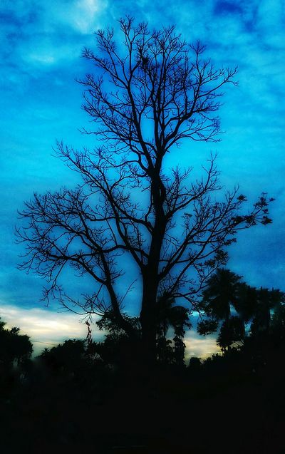 Leaflesstree Bare Branches Bare Tree Beauty In Nature Blue Branch Branches Change Clear Sky Day Growth Low Angle View Majestic Nature No People Outdoors Scenics Sky Nature Beauty In Nature Evening Blue Sky Cloud - Sky No People Outdoors