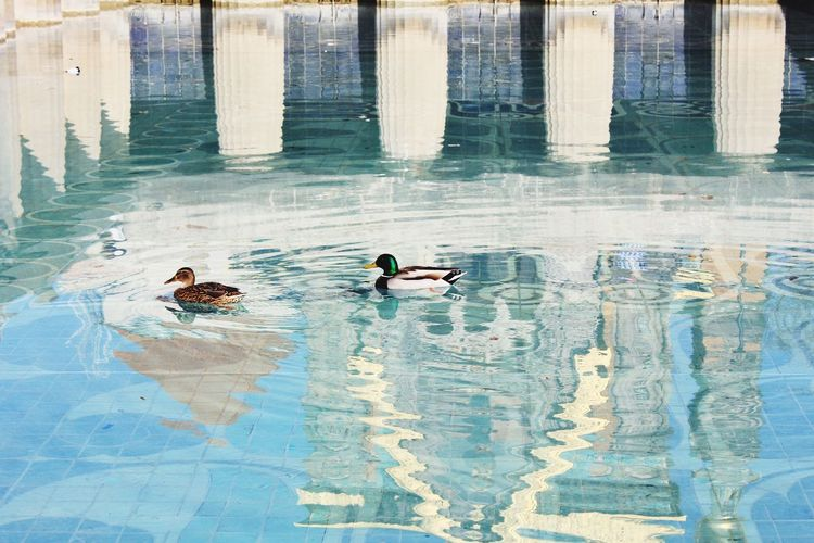 High angle view of ducks swimming in pool