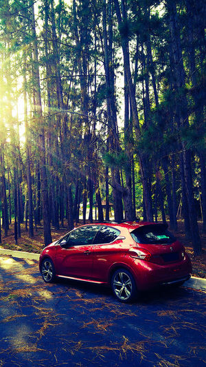 EyeEmNewHere Hatchback Rural Lifestyle Summer In The City Car Day Escape From The City Forest Janda Baik Motor Vehicle Nature No People Outdoors Peugeot208 Red Road Trip Rural Life Sunlight Tree Tree Trunk Village Life Weekend Getaway Wood Cabin Wood Structure WoodLand