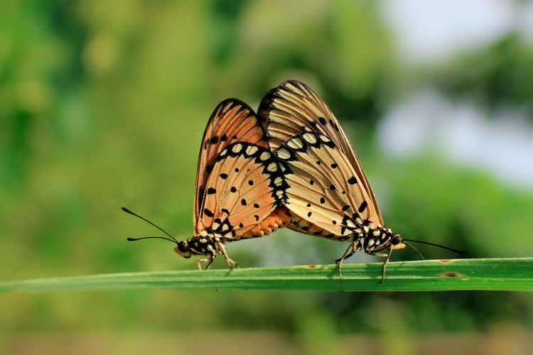 butterfly EyeEm Selects Indonesia_photography Nature Nature Photography Macro Macro Photography Macro_collection Macro Nature Macro Insects Macroclique Perching Full Length Butterfly - Insect Insect Spread Wings Leaf Animal Themes Close-up