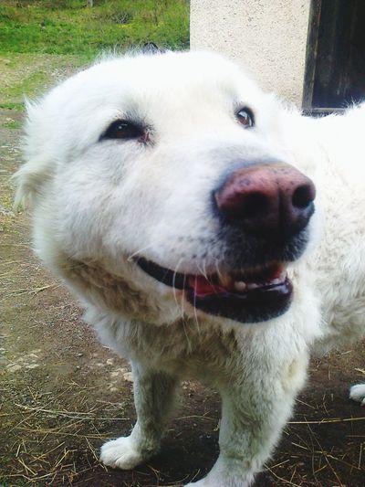 Smile Dog Cheese!