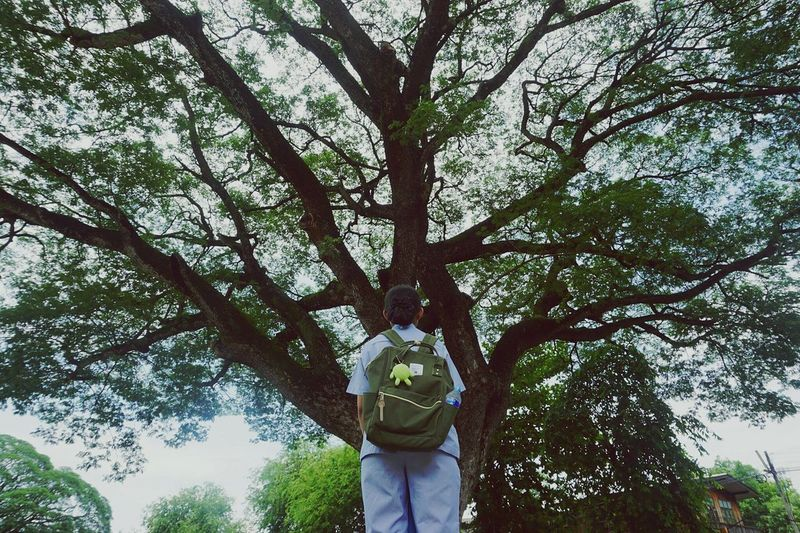 Tree One Person Real People Low Angle View Casual Clothing Standing Rear View Lifestyles Outdoors Growth Day Men One Man Only Only Men Nature Adults Only Sky Branch Adult Beauty In Nature