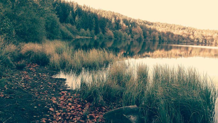 Lac Du Bouchet Automne France Nature