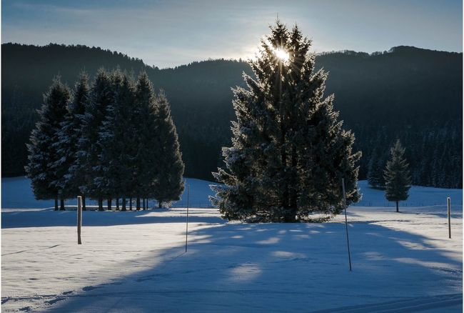 Winter Snow Cold Temperature Season  Tree Weather Tranquil Scene Tranquility Landscape Covering White Cold Beauty In Nature Landscape #Nature #photography Nature Field Beauty In Nature Scenics Snow Covered Sky Mountain Segni e Silenzi Landscapephotography Sunrise_sunsets_aroundworld