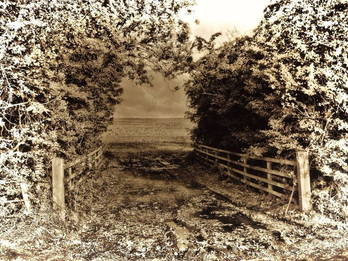 Eye4photography  Landscape_Collection Nature_collection Sepia